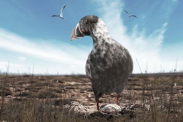 Động vật 100 năm sau biến đổi kỳ quái như thế nào? - 2