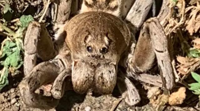 Giật mình bức ảnh chụp nhện quái vật ở sân sau nhà - 1