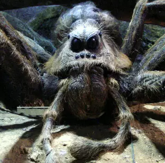 Giật mình bức ảnh chụp nhện quái vật ở sân sau nhà - 3