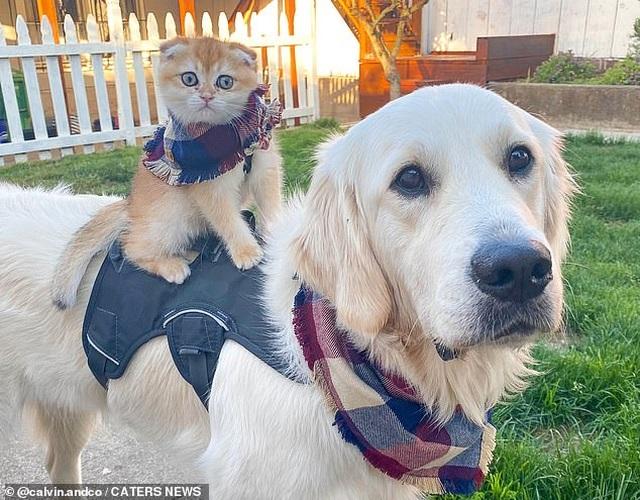"""Cộng đồng mạng phát sốt với tình bạn """"thân nhau như… chó với mèo"""""""