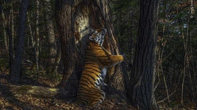 Ngắm những bức ảnh đoạt giải Ảnh động vật hoang dã đẹp nhất năm 2020 - 1