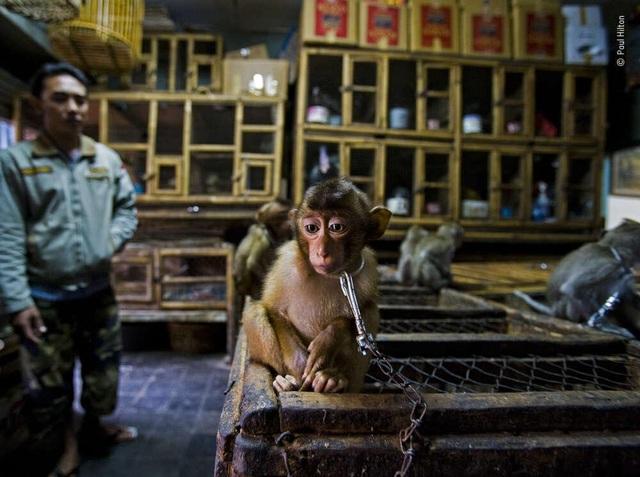 Ngắm những bức ảnh đoạt giải Ảnh động vật hoang dã đẹp nhất năm 2020 - 10
