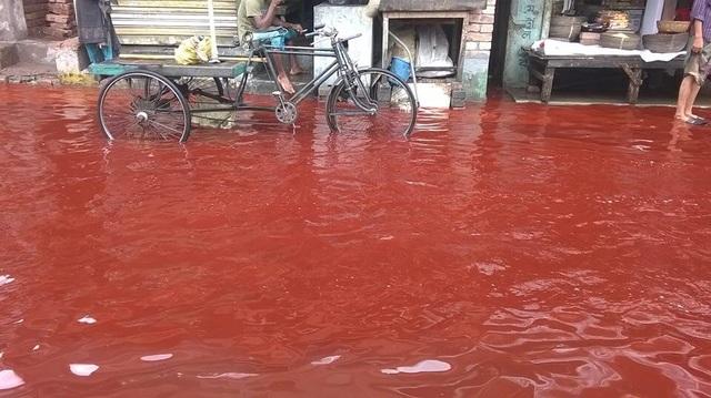 Tại sao một số vùng trên trái đất lại xuất hiện hiện tượng mưa máu? - 2