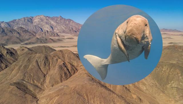 Bò biển khổng lồ cổ đại từng bơi qua sa mạc Ai Cập khô cằn ngày nay - 1