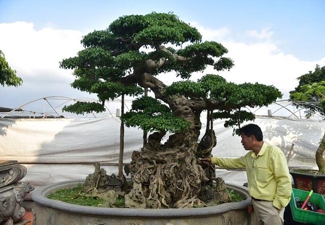 Điểm danh những cây sanh cổ khiến đại gia mê mẩn, xuống tiền không tiếc tay - 4