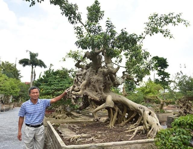 Điểm danh những cây sanh cổ khiến đại gia mê mẩn, xuống tiền không tiếc tay - 3