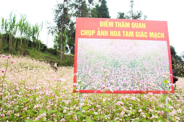 Tháng 10 về rủ nhau ngắm cánh đồng hoa tam giác mạch đẹp mê mải ở Hà Giang - 10