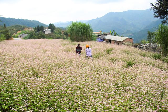 Tháng 10 về rủ nhau ngắm cánh đồng hoa tam giác mạch đẹp mê mải ở Hà Giang - 11