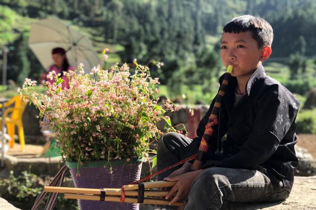 Tháng 10 về rủ nhau ngắm cánh đồng hoa tam giác mạch đẹp mê mải ở Hà Giang - 12