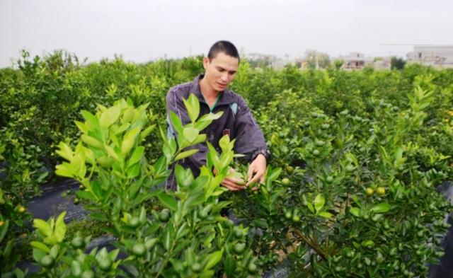 Hơn 100 nghìn hộ nghèo được đào tạo nghề, giải quyết việc làm - 1