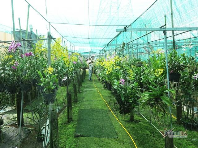 Vườn lan gần 20.000 cây: Tài sản hàng chục tỷ của tay chơi Sài Thành - 1