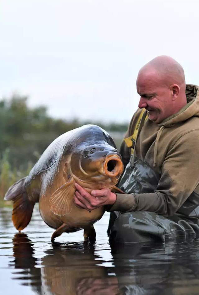 Bắt được cá chép khổng lồ nặng 34 kg - 2