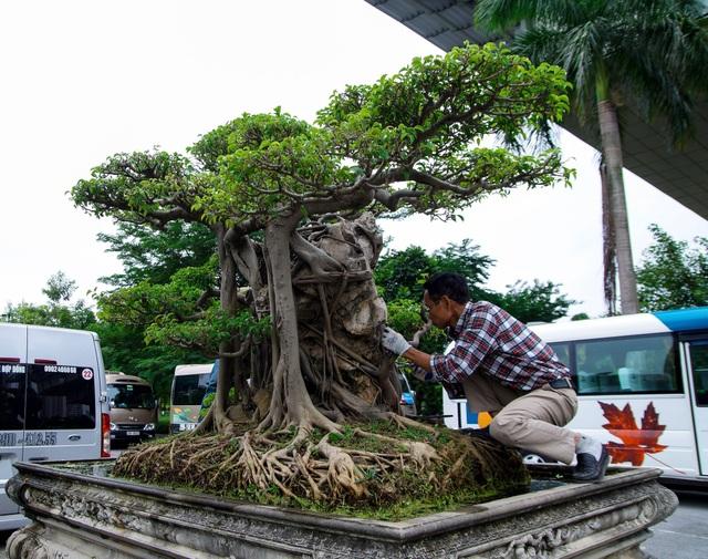 Mãn nhãn với cây sanh cổ song thân, đẹp từng centimet của đại gia Hà Nội - 4