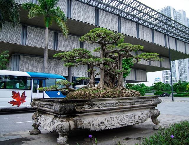 Mãn nhãn với cây sanh cổ song thân, đẹp từng centimet của đại gia Hà Nội - 1