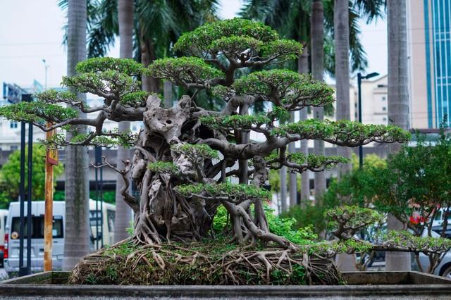 Mãn nhãn với cây sanh cổ song thân, đẹp từng centimet của đại gia Hà Nội - 5