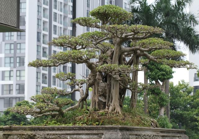 Mãn nhãn với cây sanh cổ song thân, đẹp từng centimet của đại gia Hà Nội - 8