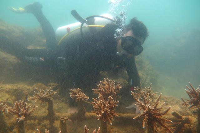 KDI Holdings đầu tư 15 tỷ đồng tái sinh san hô tại Nha Trang - 3