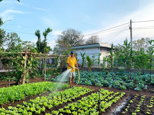 Đã mắt khu vườn 700m2 đủ loại rau củ quả sạch của gia đình ở Đắk Lắk - 1