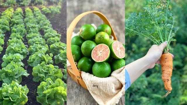 Đã mắt khu vườn 700m2 đủ loại rau củ quả sạch của gia đình ở Đắk Lắk - 3