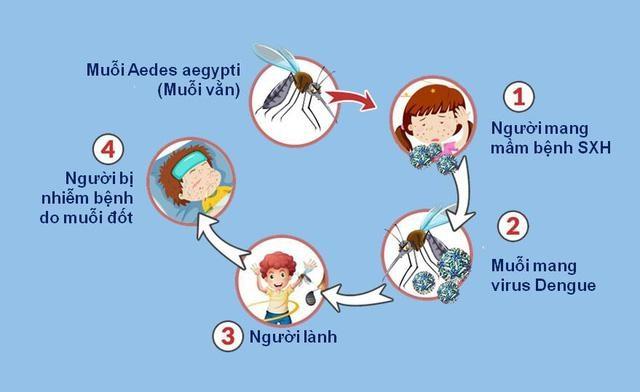 Bảo vệ bản thân và gia đình khỏi dịch sốt xuất huyết hiệu quả - 2