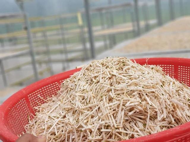 Đặc sản lạ Sóc Trăng: Loại trà không làm từ cây chè, giá 1 triệu đồng/kg - 3