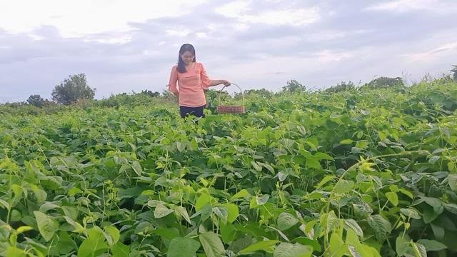 Khu vườn rộng 1.400m2 ngập tràn rau củ quả của ông bố gà trống nuôi con - 5