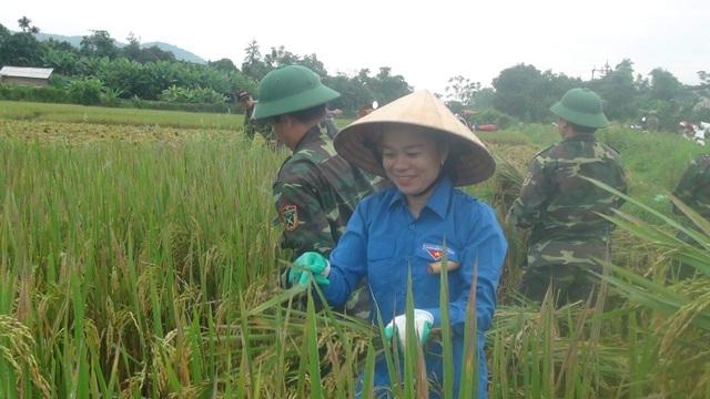 Sức trẻ giúp dân gặt lúa để chạy lũ - 5