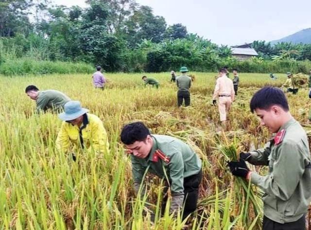 Sức trẻ giúp dân gặt lúa để chạy lũ - 4