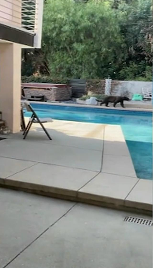 Gấu đột nhập nhà dân qua cửa sau tìm thức ăn, nước uống - 3