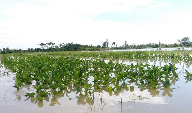 Hàng nghìn căn nhà chìm trong biển nước, hàng nghìn ha lúa bị ngập úng - 2
