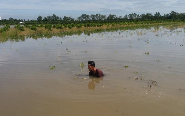 Hàng nghìn căn nhà chìm trong biển nước, hàng nghìn ha lúa bị ngập úng - 3