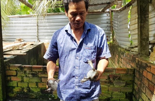 """Kiếm thu nhập """"khủng"""" nhờ làm nghề nuôi ếch Thái Lan - 2"""