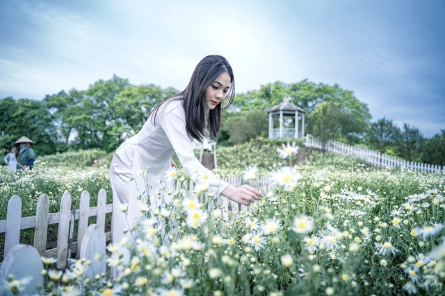 Lost in the field of beautiful chrysanthemum 3,000m2 in Hanoi - 5