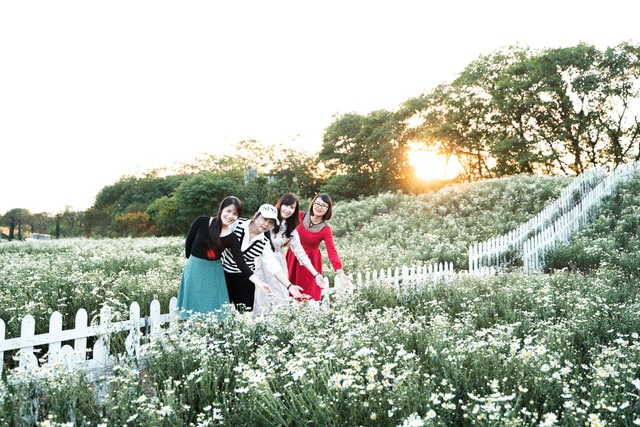 Lost in the field of beautiful chrysanthemum 3,000m2 in Hanoi - 2