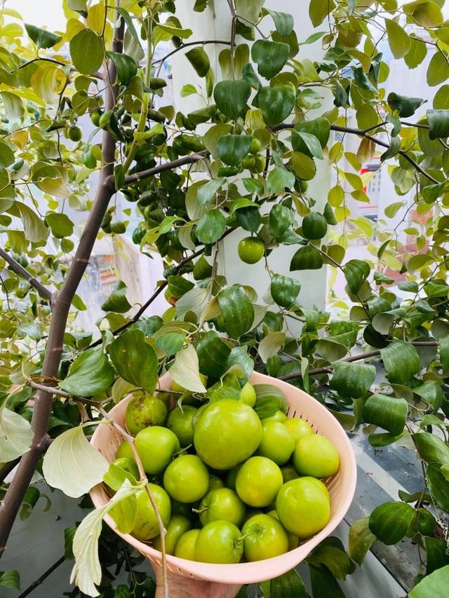 Khu vườn 20m2 rau trái tươi tốt trên sân thượng của vợ chồng trẻ ở Sài Gòn - 2