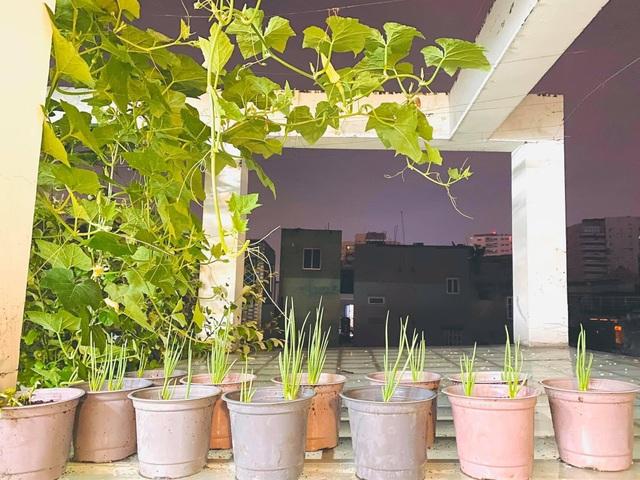 Khu vườn 20m2 rau trái tươi tốt trên sân thượng của vợ chồng trẻ ở Sài Gòn - 6