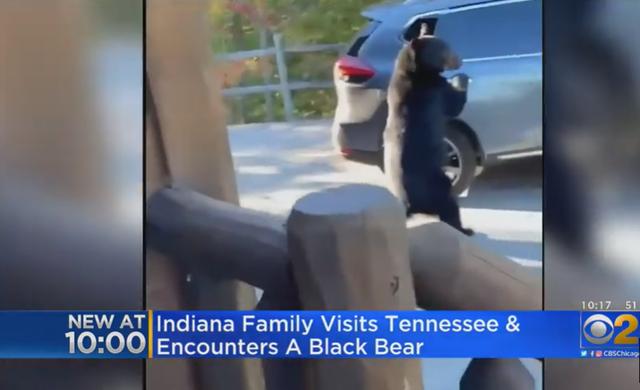 Kinh ngạc xem gấu mở cửa, trèo vào xe ô tô như người - 1
