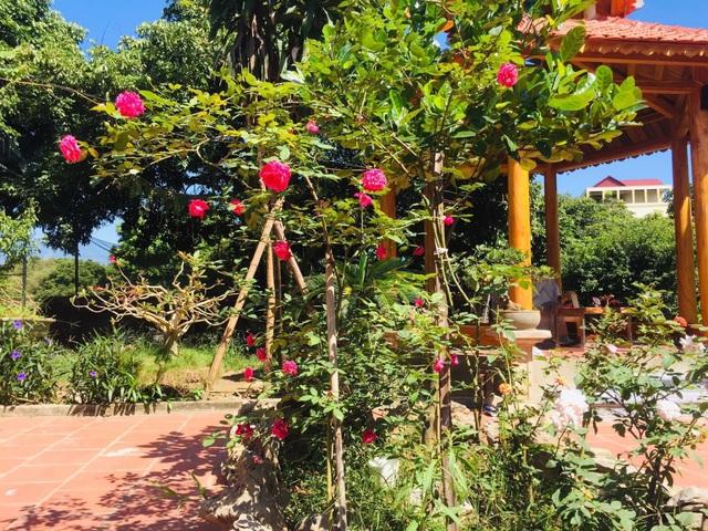 Ông bố Hà Nội làm nhà vườn 1.500m2 tràn ngập cây xanh, đẹp bình yên  - 7