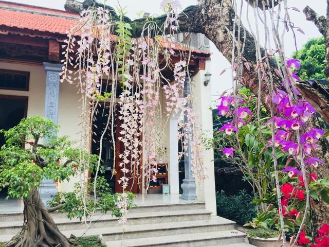 Ông bố Hà Nội làm nhà vườn 1.500m2 tràn ngập cây xanh, đẹp bình yên  - 8