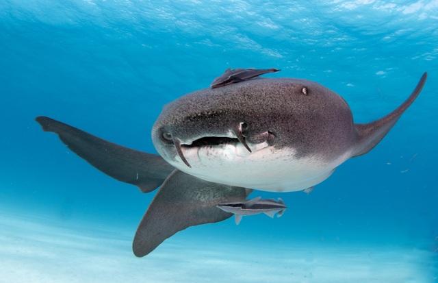 Nghẹt thở khoảnh khắc 2 con cá mập áp sát đoàn người đang bơi - 2