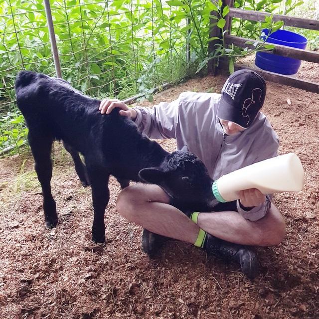 Cô gái Việt theo chồng sang Úc làm nông trại 200 hecta trồng rau, nuôi bò - 6