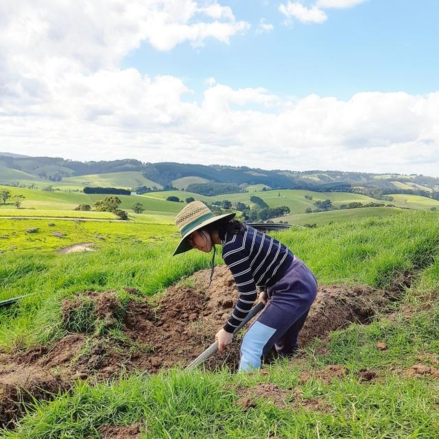 Cô gái Việt theo chồng sang Úc làm nông trại 200 hecta trồng rau, nuôi bò - 8