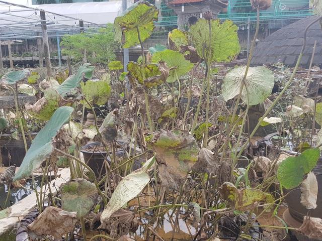 Quảng Trị: Người trồng hoa trắng tay sau mưa lũ! - 11
