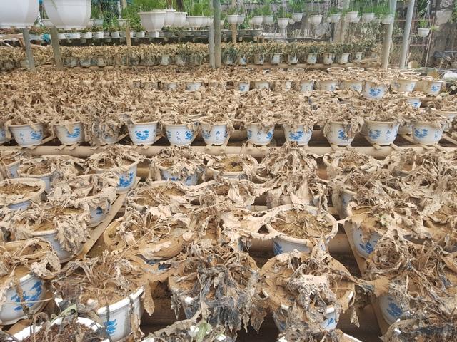 Quảng Trị: Người trồng hoa trắng tay sau mưa lũ! - 4