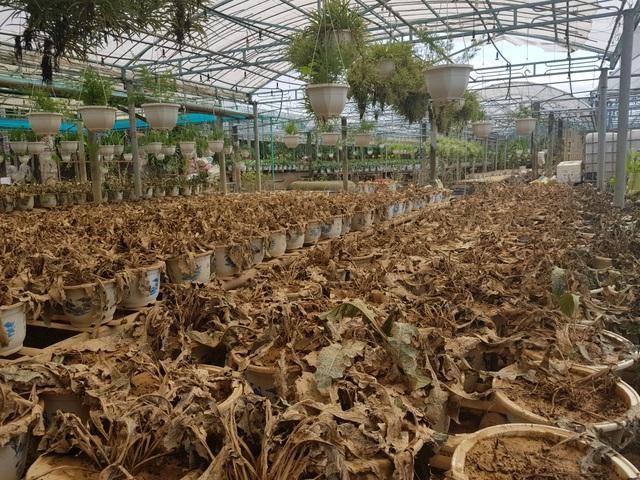 Quảng Trị: Người trồng hoa trắng tay sau mưa lũ! - 9