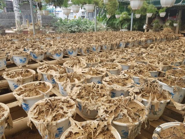 Quảng Trị: Người trồng hoa trắng tay sau mưa lũ! - 5