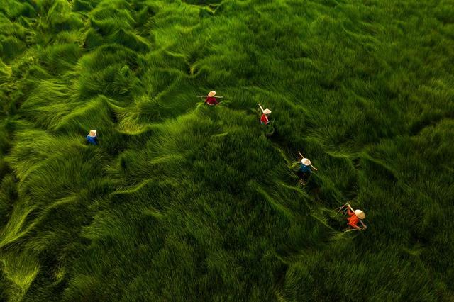 4 khoảnh khắc tuyệt đẹp của Việt Nam tại giải ảnh quốc tế - 3