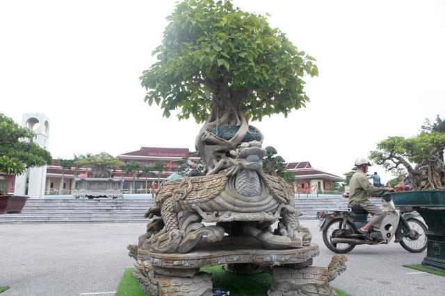 """""""Báu vật"""" nhà Phật, lần đầu xuất hiện khiến giới chơi cây choáng ngợp - 2"""