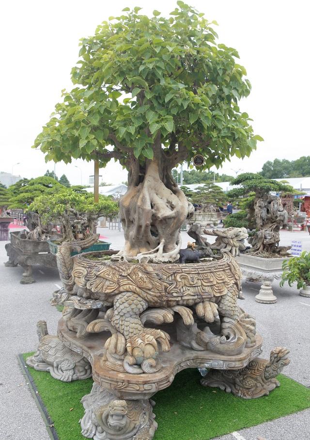 """""""Báu vật"""" nhà Phật, lần đầu xuất hiện khiến giới chơi cây choáng ngợp - 3"""