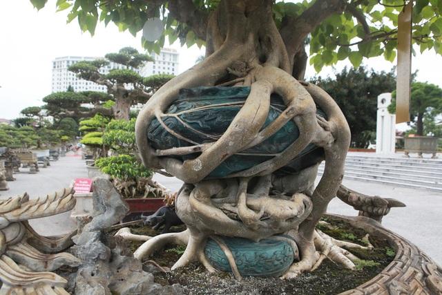 """""""Báu vật"""" nhà Phật, lần đầu xuất hiện khiến giới chơi cây choáng ngợp - 4"""